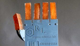 Terleyebilen Robotik Kol Geliştirildi