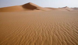 Sahra Çölü'nde Balık Fosilleri Bulundu